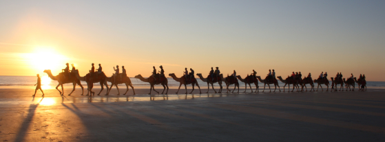 Broome - Camels