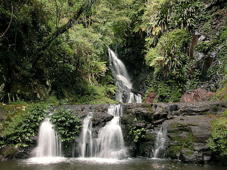Gondwana Rainforests Photo